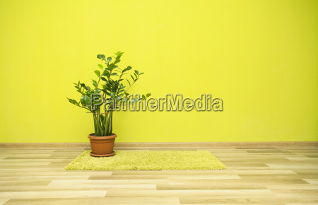 plant, in, green, room - 14072561