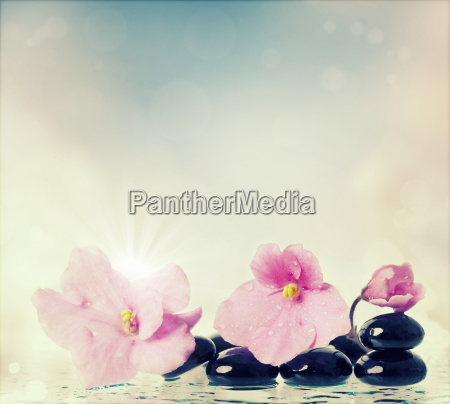 spa, treatment, massage, stones, and, pink - 14072617