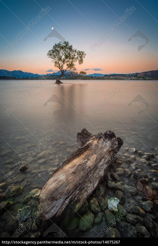 lonely, tree, at, lake, wanaka, in - 14075267