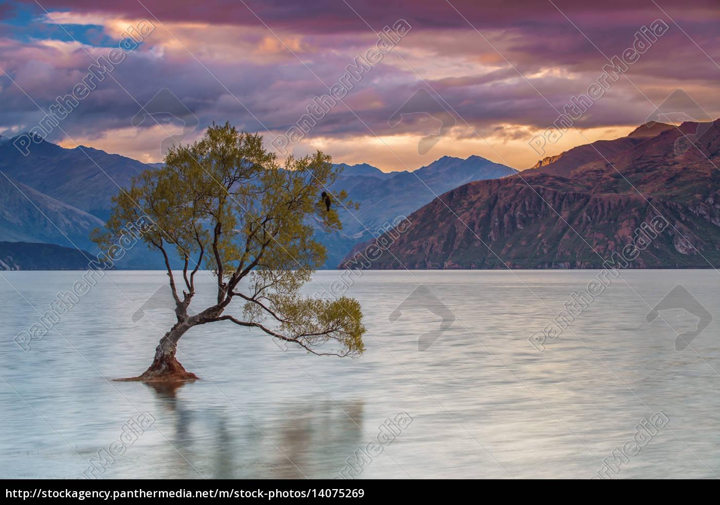 lonely, tree, at, lake, wanaka, new, zealand - 14075269