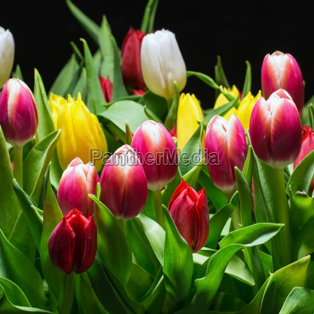 bouquet, of, bright, tulips, blooms - 14078117