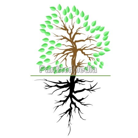 green, tree, with, root, isolated, on - 14078521