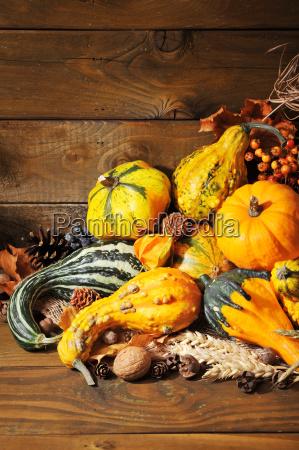 pumpkins - 14081501