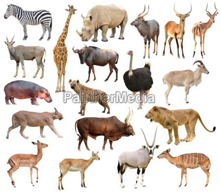 africa, animals - 14082819