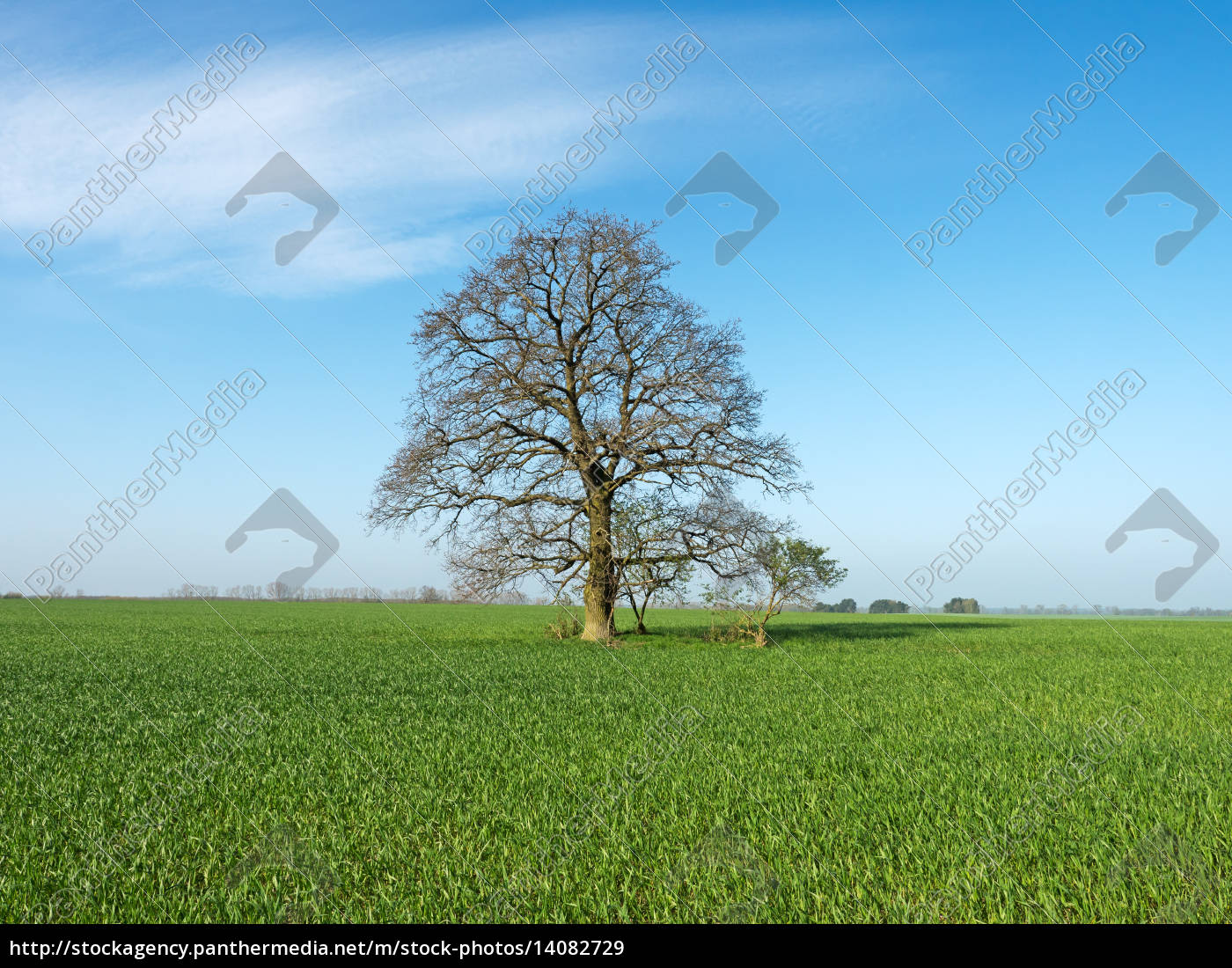 tree, agriculture, farming, field, oak, spring - 14082729