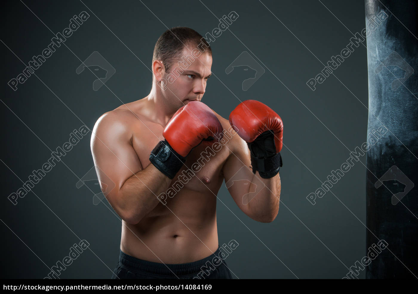 young, boxer, boxing - 14084169