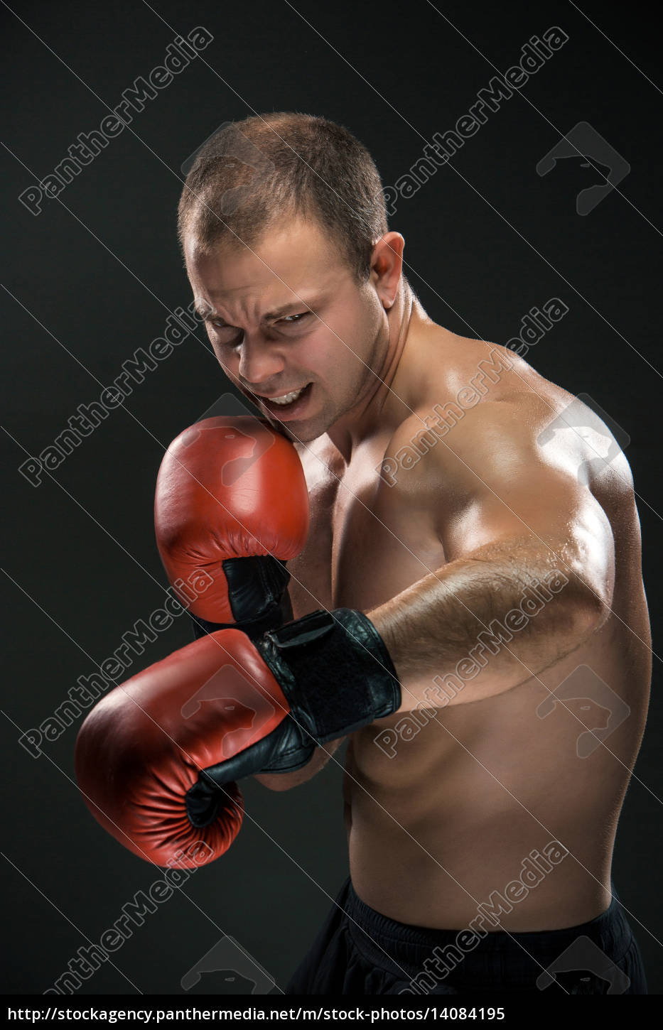 young, boxer, boxing - 14084195