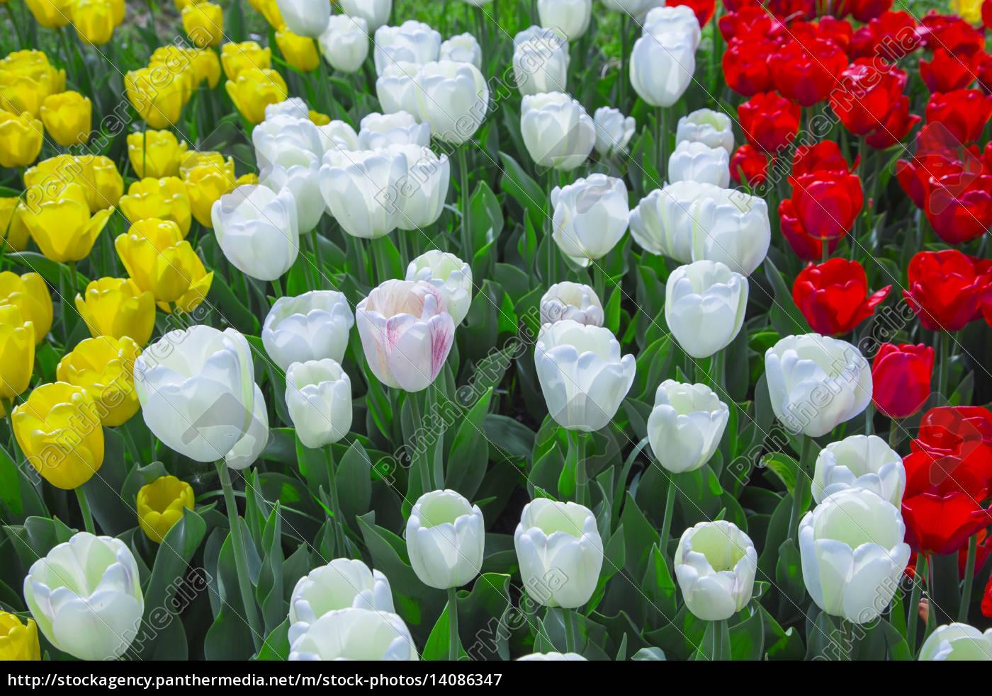 garden - 14086347