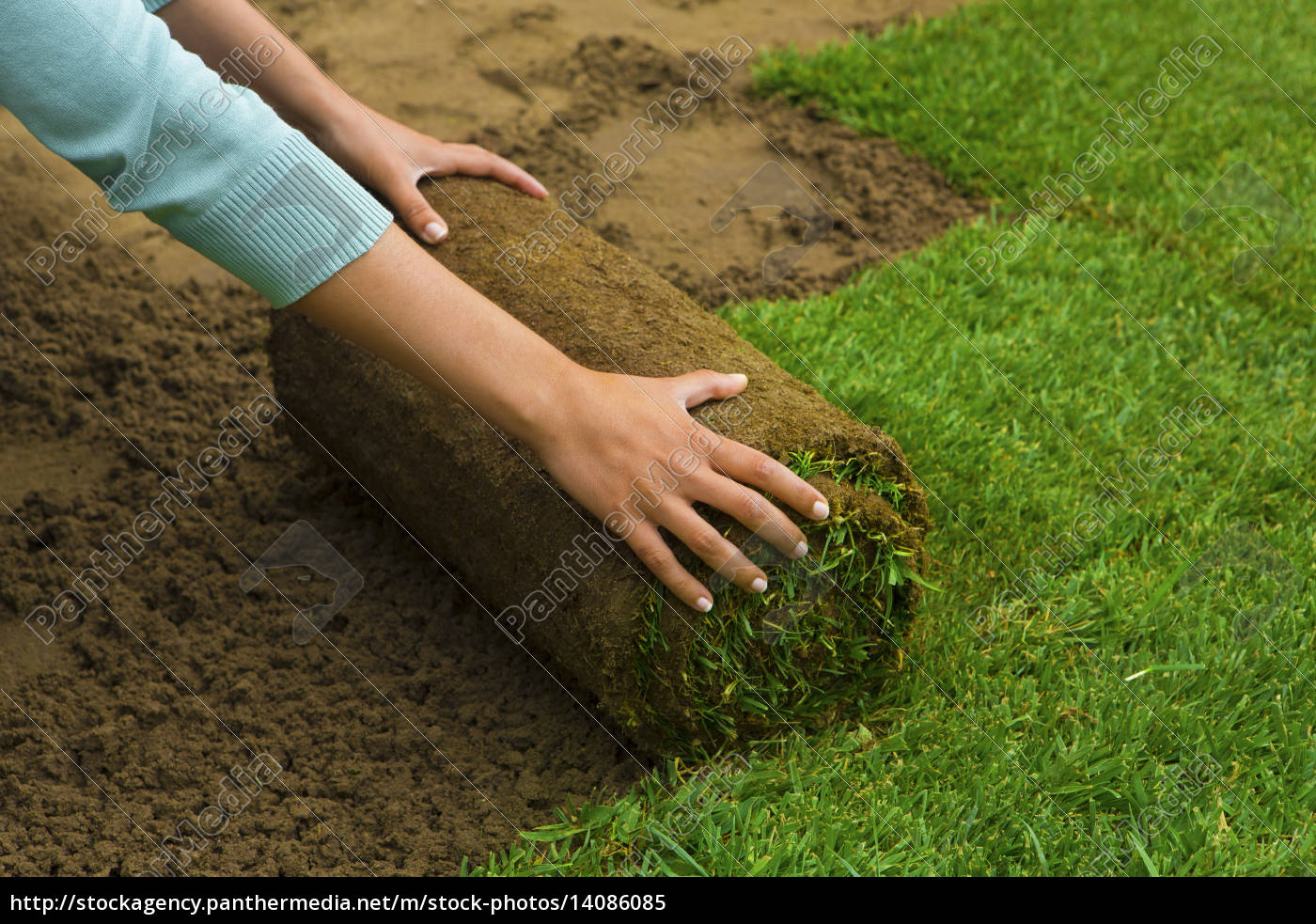 lawned, garden - 14086085