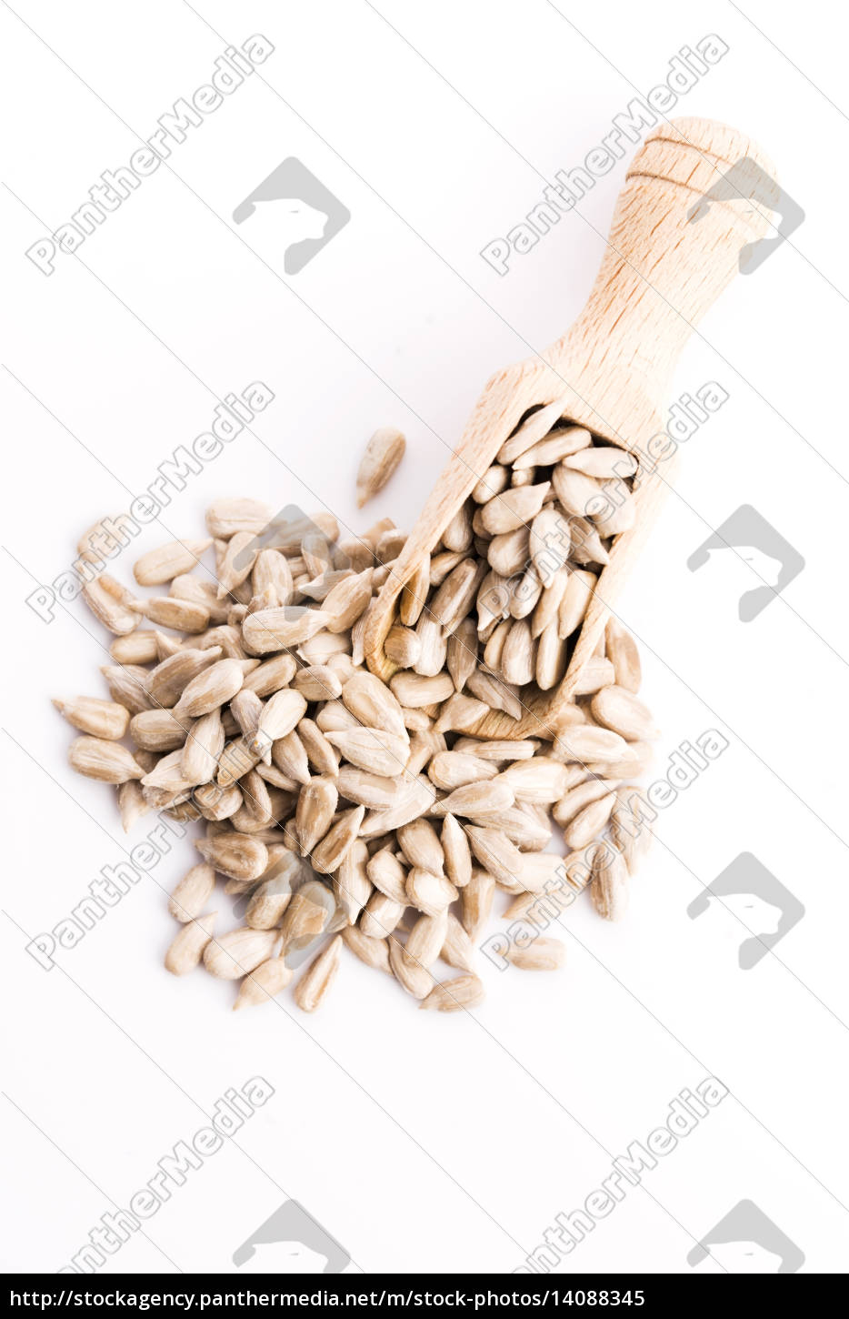 sunflower, seeds, isolated, on, white - 14088345
