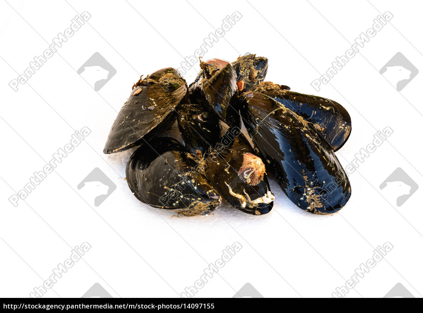 dirty, mussels - 14097155