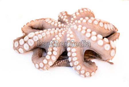 octopus, defrozed - 14097153