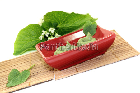 fresh, wasabi, with, leaf, and, flower - 14100553