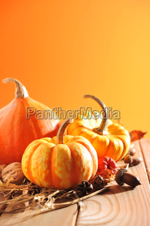 three, pumpkins - 14101315