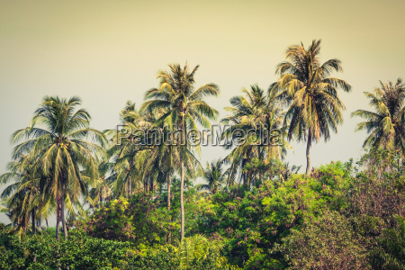travel vacation background tropical island