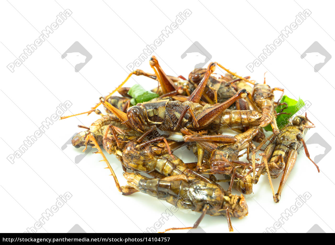 fried, insects, , regional, delicacies, food, in - 14104757