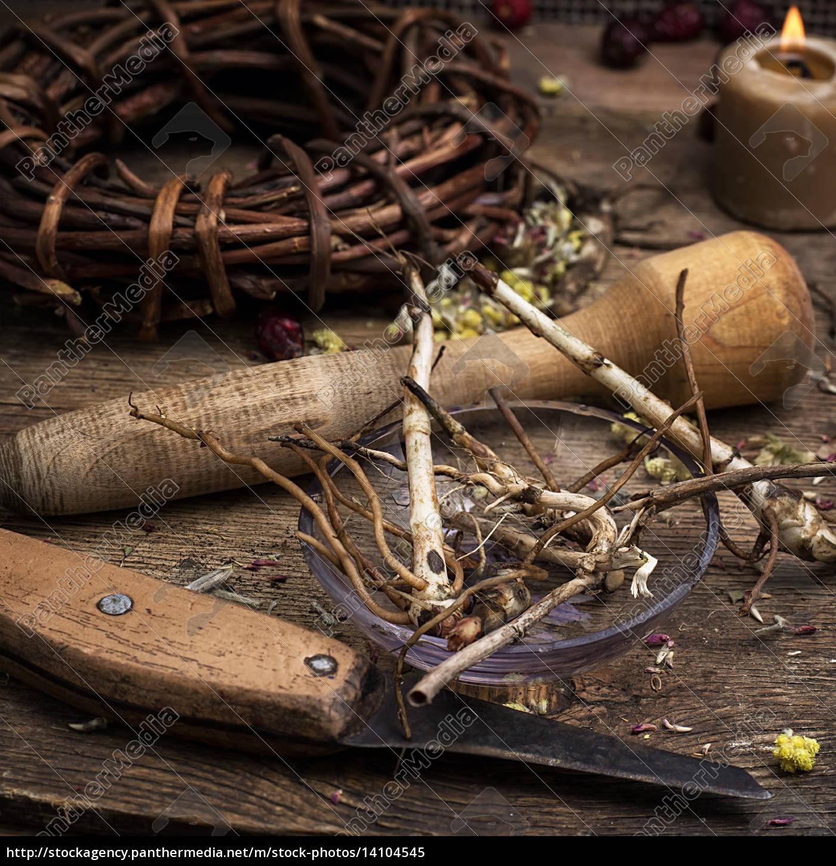 medicinal, root - 14104545