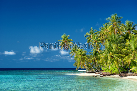 lonely beach with palm trees in