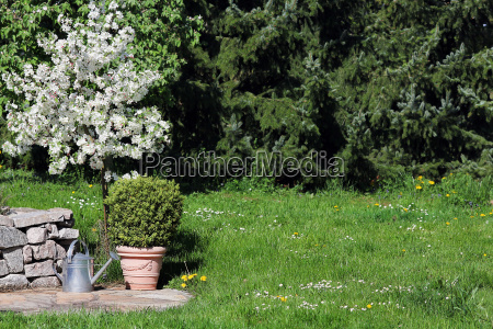 blooming apple tree and book with