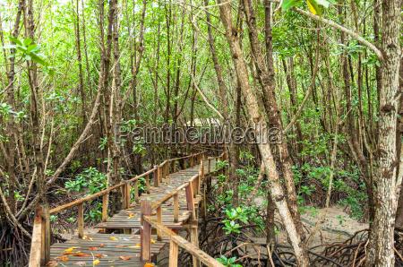 landscape of wood corridor at mangrove