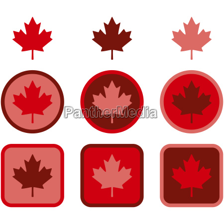 maple leaf flat design