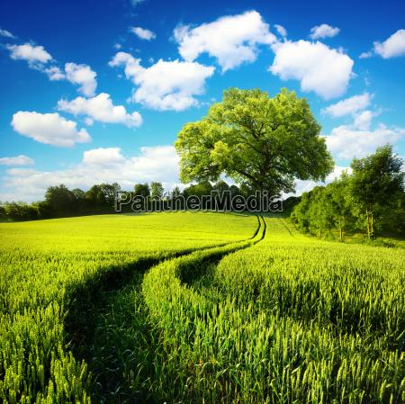 idyllic rural nature