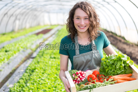 young attractive woman harvesting vegetable in
