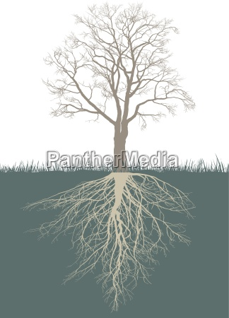abstract walnut tree with roots