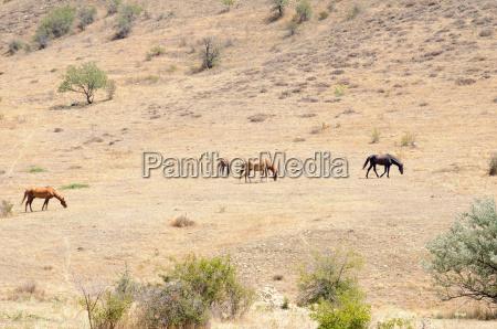 horses on a hillside