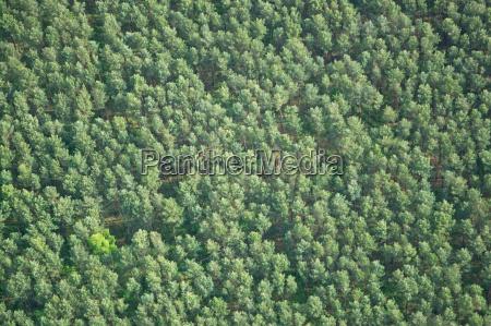 forest brandenburg germany