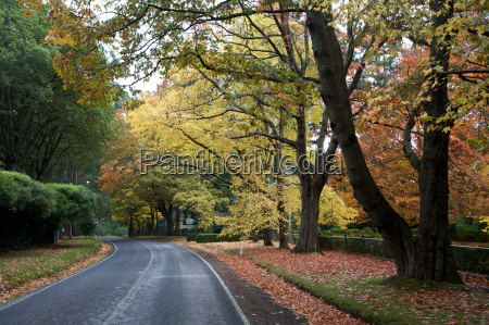 beautiful fall trees with road drive