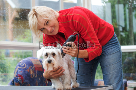 smiling blonde woman is grooming a