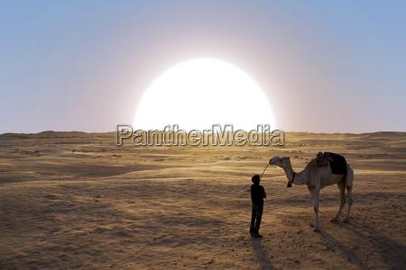 sunset in the sahara desert