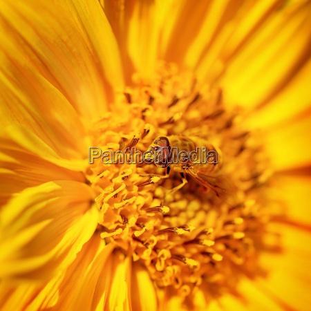 beautiful little bee on a flower