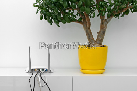 internet router and flower pot on