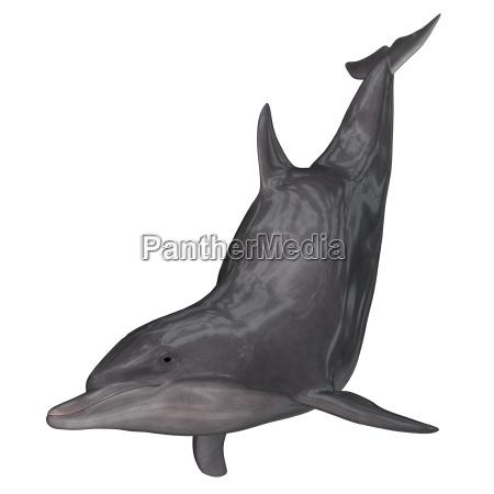 dolphin 3d render