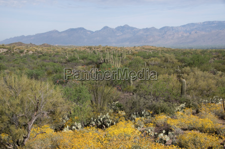 saguaro national park arizona united states