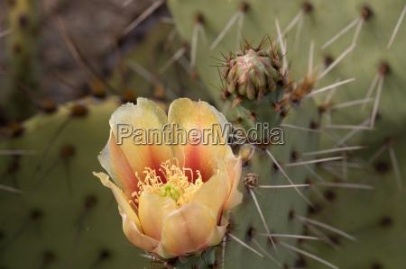 cactus in saguaro national park arizona