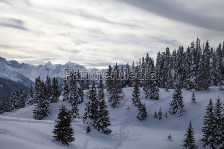 winter on the dobratsch