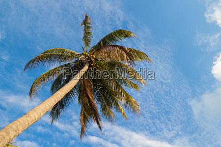 looking up a palm tree with