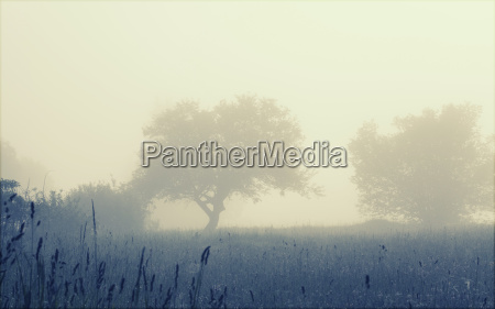 trees in the foggy field soft