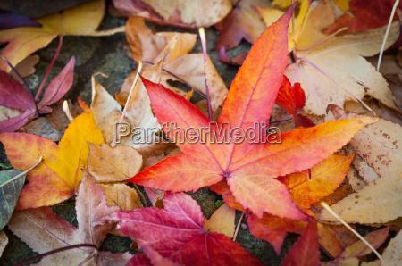 blade farverige lov efterar