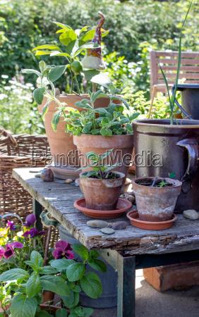 garden wood leaves summer summerly gardening