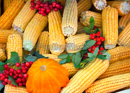 harvest vegetables sold at the fair