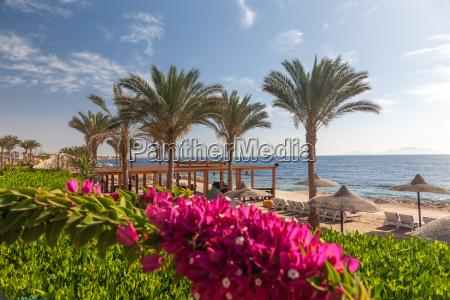 beach at the luxury hotel sharm