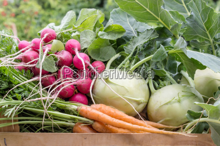 turnip carrots radishes vegetable crop red