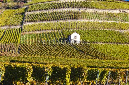 vineyards in sion region canton valais