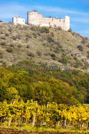 ruins of falkenstein castle with vineyard
