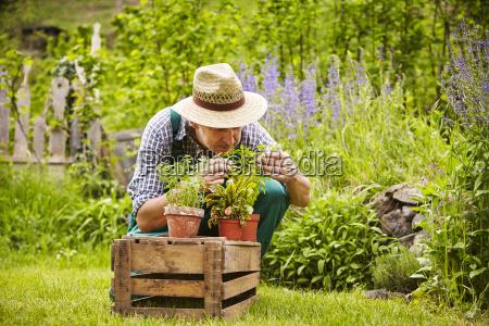 smell man seedlings garden