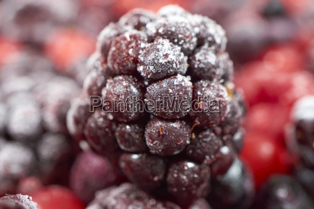 macro shot of frozen blackberry on